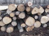 Softwood  Logs Spruce Picea Abies - Whitewood - Spruce saw logs