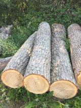 Turkey oak logs - QUERCUS CERRIS