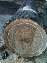 Hardwood  Logs - Black Walnut (Juglans Nigra)