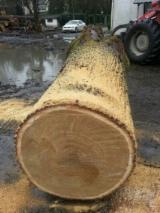 Hardwood  Logs Demands - Veneer Logs, Oak (European)