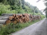 Hardwood  Logs - Saw european oak logs A, A/B, A/B/C grade