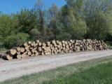 Hardwood  Logs - Saw european poplar logs A, A/B, A/B/C grade