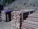 Softwood  Logs - Spruce (Picea Abies) - Whitewood 4-7 cm A Peeling Logs in Romania