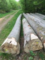 Hardwood  Logs Beech Europe For Sale Germany - Fresh cut Beech logs
