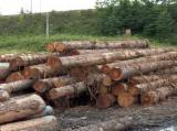 Tropical Wood  Sawn Timber - Lumber - Planed Timber - CYPRESS WOOD LOGS