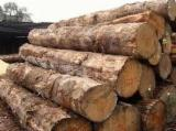 Tropical Wood  Sawn Timber - Lumber - Planed Timber Teak - TEAK WOOD LOGS