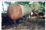 Bois Exotique  Plots Reconstitués - Plateaux Dépareillés FSC - Semi-Avivés, Iroko (Mvuli, Kambala, Semli, Rokko), Cameroun, FSC