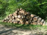 Hardwood  Logs Acacia For Sale - Saw european beech logs A, A/B, A/B/C grade