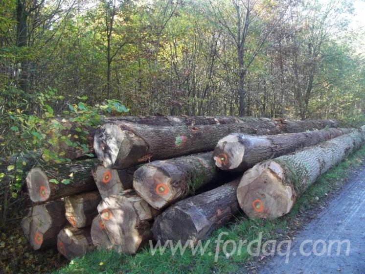 European-White-Oak-Logs