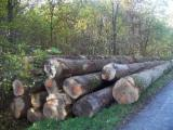 European white oak logs
