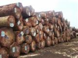 Find best timber supplies on Fordaq Sapelli and Padouk logs 250 x 250 available
