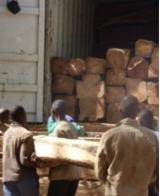 Find best timber supplies on Fordaq Kosso rosewood logs
