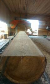 Softwood  Unedged Timber - Flitches - Boules Larch Larix Spp. - Siberia Larch - Larix Sibirica 200€