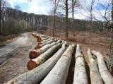 Softwood  Logs France - PINE SILVETRIS/POPLAR/BEECH/ASH LOGS