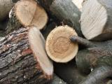 Firewood, Pellets And Residues All Broad Leaved Species - All Broad Leaved Species Firewood/Woodlogs Not Cleaved 5+ cm
