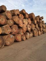 Tropical Wood  Logs Tali Missanda, Elune, Muave, Kassa - Tali Logs Ready For Inspection - AMEX LTD