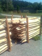 Hardwood  Logs Acacia - Robinia stakes debarked 8-14 cm diameter