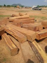 Tropical Logs importers and buyers - I NEED TO BUY KOSSO WOOD!