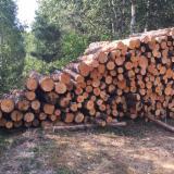 Birch&alder saw logs