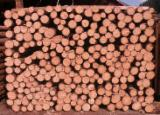 Softwood  Logs -  Conical shaped round wood, Fir/Spruce