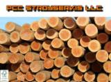 Softwood  Logs All Coniferous - Saw Logs softwood - pine, spruce, cedar, larch and spruce