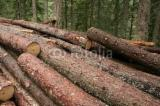 Softwood  Logs Demands - Saw Logs, Fir/Spruce/Pine