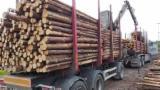 Estonia Suministros - Venta Troncos Para Aserrar Pino Silvestre  - Madera Roja Estonia