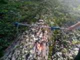 Hardwood  Logs Peeling Logs - Selling poplar logs