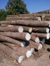 Hardwood  Logs Acacia - Selling acacia logs