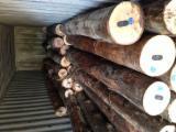 Tropical Wood  Logs - EUCALYPTUS WOOD LOGS