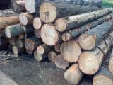 Softwood  Sawn Timber - Lumber - White spruce supplier for construction wood