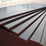 Wholesale Plywood - Other Types - Film faced plywood(black film )