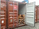 Standing Timber No Certificate At Present Time Pitch Pine Pinus Caribea For Sale - Eucalyptus logs Grandys