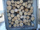 Hardwood  Logs For Sale - Birch logs for sale from Lithuania