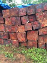 Hardwood  Logs For Sale - Xylia dolabrifornus saw logs