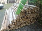 Hardwood  Logs For Sale - POLES OF EUCALYPTUS