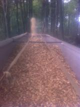 Brandhout - Resthout Houtspaanders Uit Het Bos - Woodchips fresh FULL TREE delivered in Belgium and Northern France