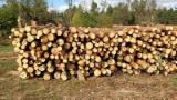 Softwood  Logs For Sale Poland - Wood for sale