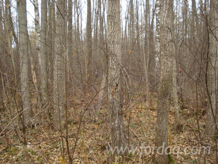 Woodland-for-sale-in