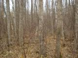 Woodlands For Sale - Woodland for sale in Lithuania