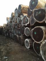 Tropical Wood  Logs - PADOUK LOGS offer