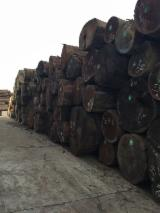 Tropical Wood  Logs For Sale - Selling AZOBE LOGS