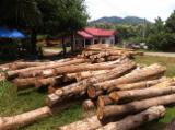 Tropical Wood  Logs For Sale - Teak logs, Excellent Grade A (TECTONA GRANDIS)