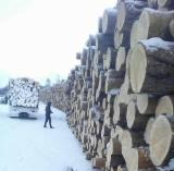 Softwood  Unedged Timber - Flitches - Boules - Siberian Angara Larch , outsource sawtimber