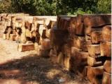 Tropical Wood  Logs For Sale - Kosso African Rosewood logs