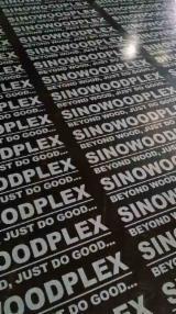 Poplar, Serotina First Grade Film Faced Plywood (Black Film) in China