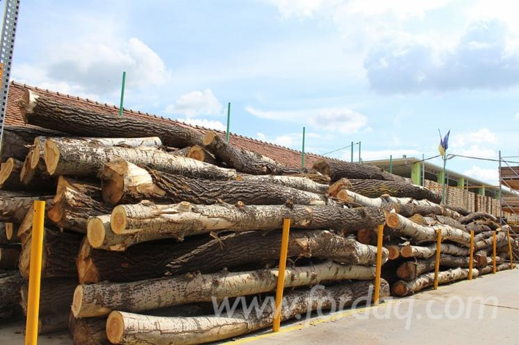 Fir-spruce-20-100-cm-AB-Saw-Logs-from