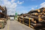 Hardwood Logs importers and buyers - 20-100 cm Common Black Alder, Poplar, Willow Saw Logs
