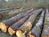 Hardwood  Logs Netherlands - White Oak Logs offer