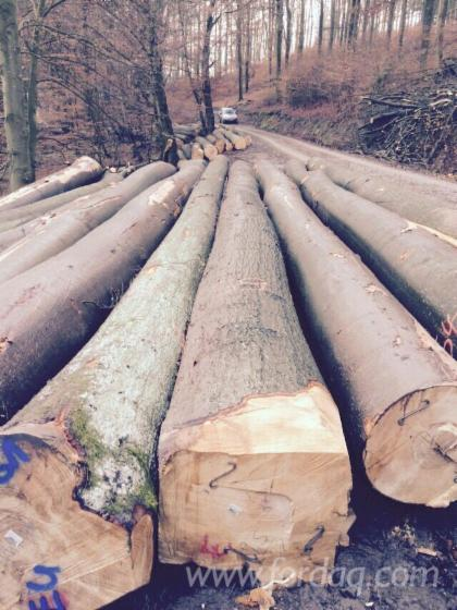 Beech-Logs-from-Germany